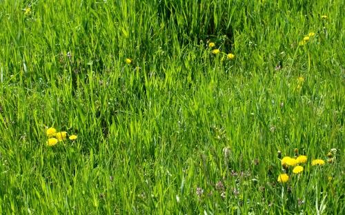 Трава весной